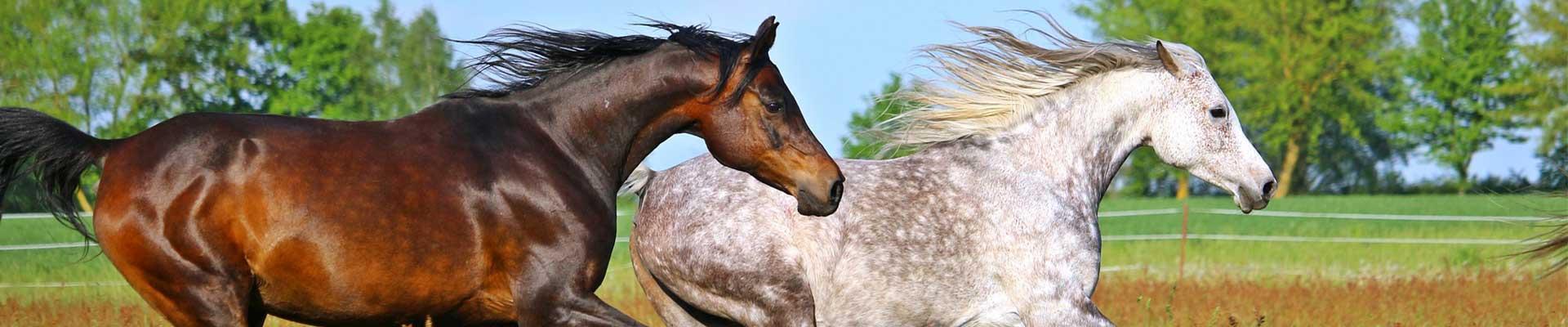 Paarden-home