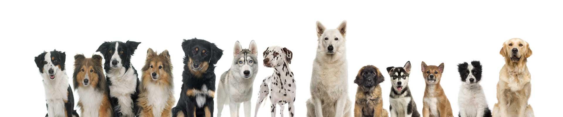 Honden dierenarts beetsterzwaag