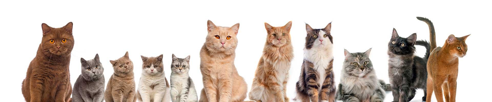 Katten Dierenarts Beetsterzwaag