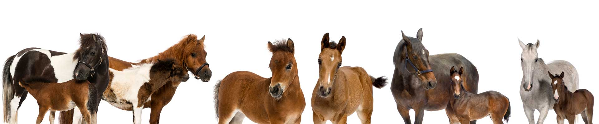 Paarden Gynaecologie Dierenarts praktijk Beetsterzwaag