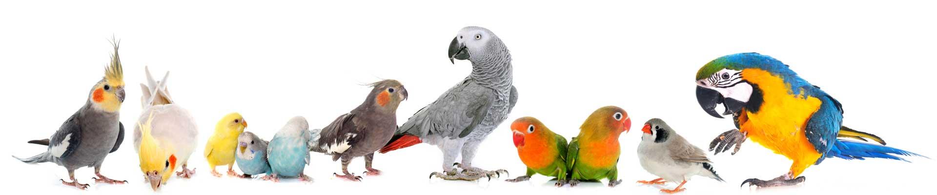 Vogels Dierenartspraktijk Beetsterzwaag