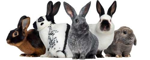groep konijnen