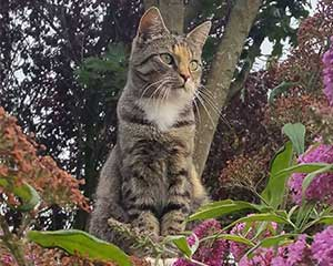 kat in de tuin Dierenartsenpraktijk Beetsterzwaag