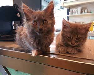 Katten bij Dierenartsenpraktijk Beetsterzwaag